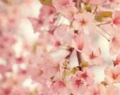 Fine Art Photograph, Pink Cherry Blossoms, Flower Photo, Cherry Blossom Art, Pastel, Shabby Chic, Cottage Art, Home Decor, Square 8x8 Print