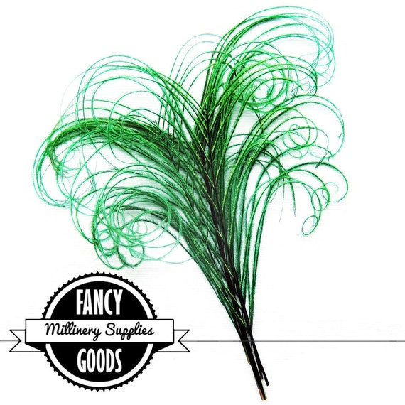 4 - Curled - Peacock Stems - Sprigs - Feathers - Green