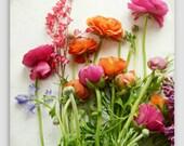 "Still life photography colorful  ranunculus flowers bright colors white still life photography floral wall art ""Spring Joy"""