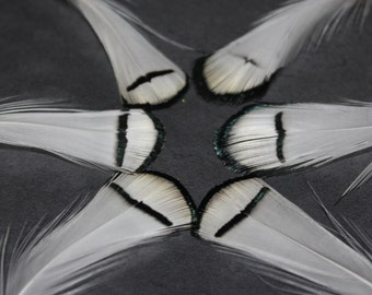 20 Lady Amherst Pheasant Craft Feathers