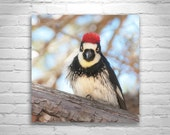 Woodpecker Bird Picture, Bird Photography, Square Print, Square Art, Forest Birds, Woodlands Art, Madera Canyon, Bird Art, Wall Art Birds