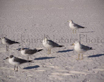 Sea Gulls Note Card-Beach Scene-Nature Photograph- Sea Gulls-Wildlife Photo Card-Seaside All Occasion Card