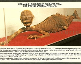 Weird Creepy Merman Exhibition - Gator Farm Hot Springs Arkansas - Vintage Postcard