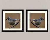Titmouse set 1 -  gift idea Nature beauty green Feathered friend birder watching Love bird wall decor Birder back yard friends wall Fine Art