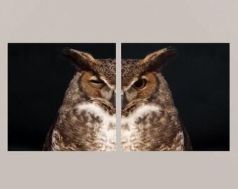 Great horned owl set 1 -  gift idea Nature beauty Feathered friend birder watching wisdom bird wall decor as wisdom as an owl wall Fine Art