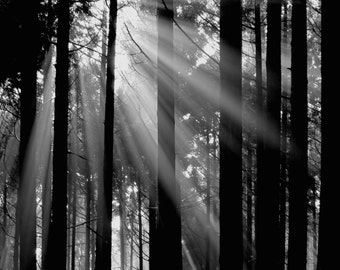 Into The Woods - Foggy Veils nursery cabin forest mountain climbing summer beach house wall deco nature photography black and white home art