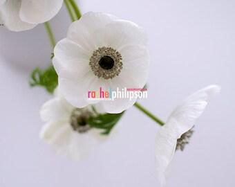 White Anemone archival print