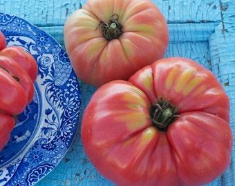 Limbaugh's Legacy Potato Top Tomato Seeds
