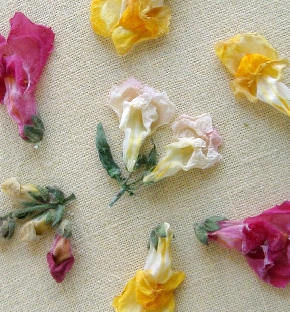 Snapdragons dried flowers flowers craft supplies by for Dried flowers craft supplies