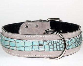"Light Grey Suede Leather Dog Collar - 2"" Dual Layer Light Turquoise Leather Dog Collar - Exotic Leather Dog Collar"