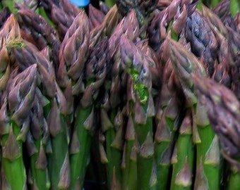 Asparagus, Martha Washington Asparagus Seeds | Exceptional Heirloom Asparagus