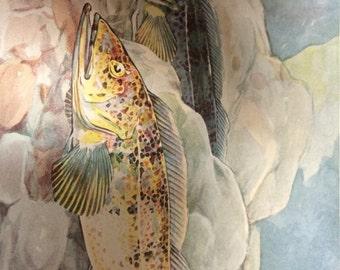 Circa 1938 Hashime Murayama Ling Cod fish .Vintage print plate six.