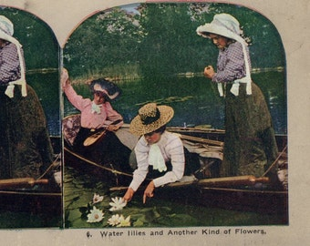 Water Lilies Antique stereo view card another kind of flowers