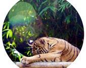 Kids Wall Decor, Tiger Cub, Decal, Sumatran Tiger Conservation, Nursery Art, Orange, Black, Stripe - Peekaboo!