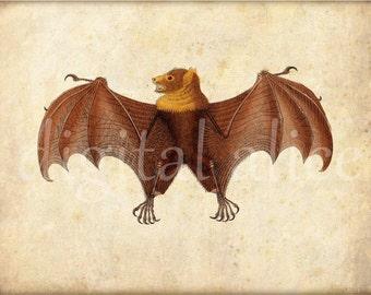 Digital ANTIQUE BAT PRINT - Digital Download - Antique Wall Art Decor Instant Printable - Vintage Brown Bat Bats 3 files