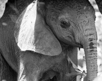 Cute Baby Elephant Photo, Black and White Print, Baby Animal Photograph, African Safari, Wildlife Photography, Nursery Wall Art, Kids Room