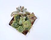 Succulent Planter // Petite White Ceramic