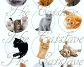 """Cat Magnets, Cat Pins, Cat Magnet Gift Sets, Cat Pinback Gift Sets, Adorable Cats, 1"""" Inch Flat, Hollow Back or Cabochons"""