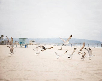 "Seaside Photograph, Sea Birds, Pale Blue White Coastal Decor, Lifeguard Stand, Hermosa Beach, California Beach, Coastal Living ""In Flight"""