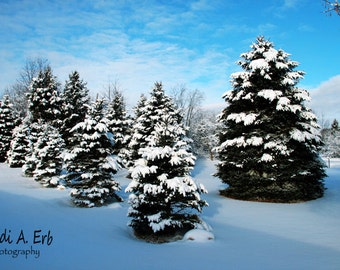 Winter note card, photo note card, Winter photography, Blank note card, Snowy landscape photography, Snowy greeting card, photo card
