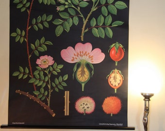 pulldown canvas Rose print poster chart wall hanging amazing