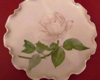 Antique Hand Painted White Rose Plate Circa 1880's