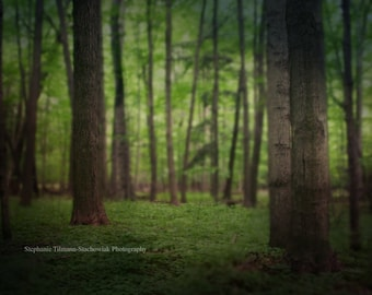 Woodland, Green, Fairy Tale, Nature Photography, Emerald, Dark