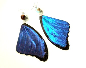 Blue Morpho Didius Butterfly Earrings, Real Butterfly Wing Earrings, Real Blue Butterfly Wing Earrings