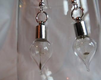 Dandelion Seed Bulb Earrings on Silver Ear Wires, earrings, bulb, dandelion