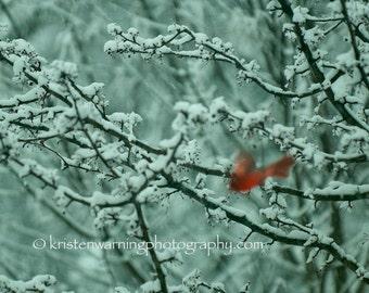 Cardinals, Birds, Winter, Bird Photos, Cardinal Photos, Nature, Photography, Cardinal Pictures