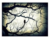"Owl Photo Print ""Mysterious Woods"" Black & White Owl Photo. Spooky. Owl in tree photo. owl art. owl print"