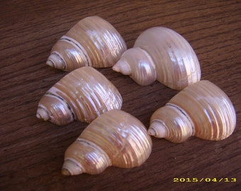 Five (5) Vintage Genuine MOP Mother of Pearl Shell Shaped Napkin Ring Holders-Beach Wedding
