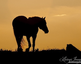 Cloud Walks at Sunset II -  Fine Art Wild Horse Photograph - Wild Horse - Cloud - Pryor Mountains - Fine Art Print