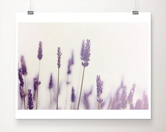 lavender photograph purple flower photograph summer photograph nature photography lavender print purple flower print