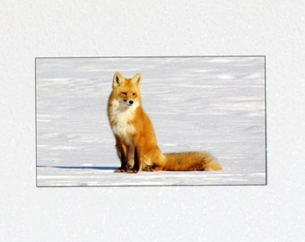 Sitting Fox Magnet - Red Fox Photography, Wildlife Magnet, Wildlife Photography Magnet, Nature Magnet, Fox Animal Magnet, Fox Nature Gift