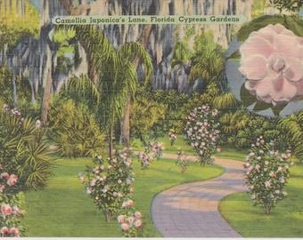 Cypress Gardens, Florida, Camellia Japonica's Lane - Linen Postcard - Unused (EEE)