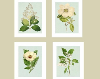 Flower Illustrations on Blue Background, Floral Botanical Print, Set of 4 Prints, 8x10 flower prints, Botanical Illustration, Economical Art