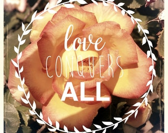 Love Quote - Floral Art Print - Love Conquers All - Pink Flower - Flower Photography - Rose Art Print - Friendship - Inspirational Quote