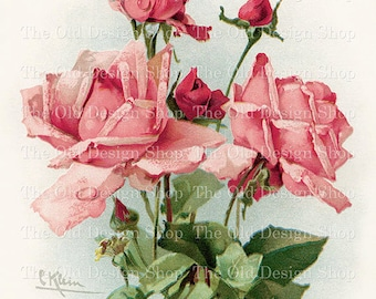 Pink Roses by Catherine Klein Vintage Flowers Printable Art Digital Download JPG Image