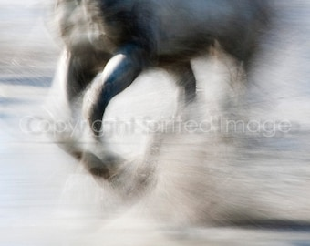 SPRAY - Equine Art, Abstract, HORSE PHOTO - Horses of the Camargue - - Edition Print, Ghost horse