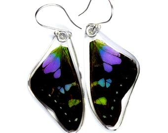 Real Butterfly Purple Spotted Swallowtail (Graphium weiskei) (top/fore wings) earrings