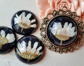25 mm Round Shape Beige Chrysanthemum ( Black Back Colour) Dried Flowers Flat Back Resin Cabochons (.na)