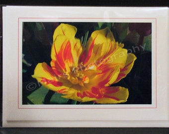 Cheerful Spring Yellow and Red Parrot Tulip, MOTHERs DAY, Thank You, Get Well, Birthday, All Occasion, Blank Greeting Card, Photo Card