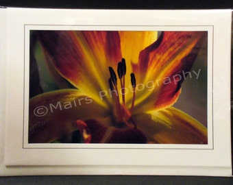 Rust Orange Yellow Flower Day Lily Eco-Friendly, Birthday, MOTHER'S DAY, Thank You, Get Well, All Occasion, Blank Greeting Card, Photo Card
