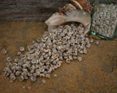 Beach Decor Seashels - Pearl Turbo Shells  1/2 Cup for Sailor's Valentines, Nautical Decor, Beach Weddings or Crafts