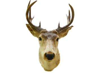 Cruelty Free Vintage 1961 Signed Rare 10 Point 5 x 5 Buck Large Taxidermy Deer Antler Mount Cabin Lodge Folk Art Large Sculpture / Prairie