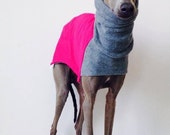 Warm sofshell coat for Italian Greyhounds