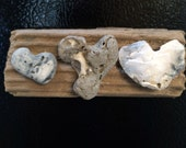 Heart shaped seashells on driftwood refrigerator magnet/love decor/heart decor/beach decor.