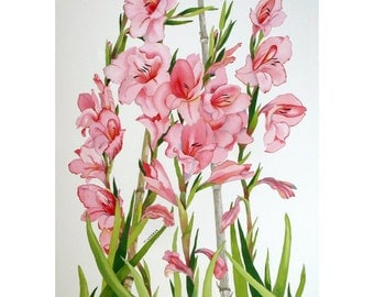 Pink Peach Gladioli Flowers Floral Original Botanical Watercolour Painting with Green Leaves