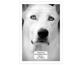 Dog photography, Gift for dog lover, Black and white dog photograph, Funny dog art, Photography print, Dog art print, Whimsical dog art.